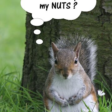 Squirrel - where are my nuts? by hartrockets