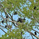 Cormorants on their nest with chicks  by 7horses