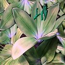 Lily in Green  by Susan  Detroy