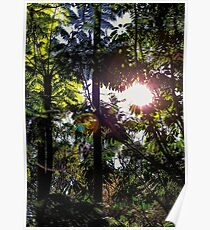 Late afternoon in the forest. Poster