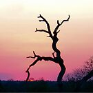 FIRST DAYLIGHT IN KRUGER - DIE DAG BREEK von Magriet Meintjes