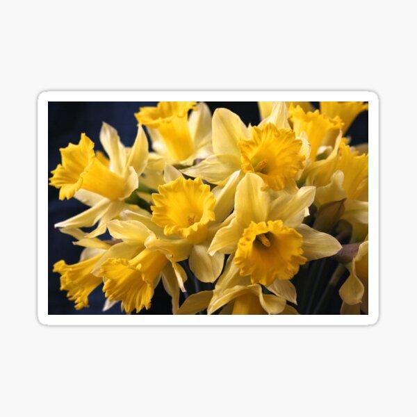 Bouquet of Bright Yellow Daffodils Sticker