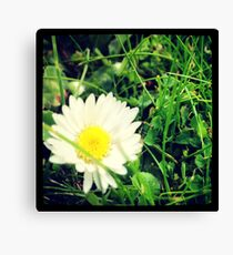 Pretty Daisy Canvas Print