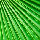 Abstract Palm Fan von MMPhotographyUK