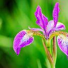 Poetic Purple Flower von MMPhotographyUK