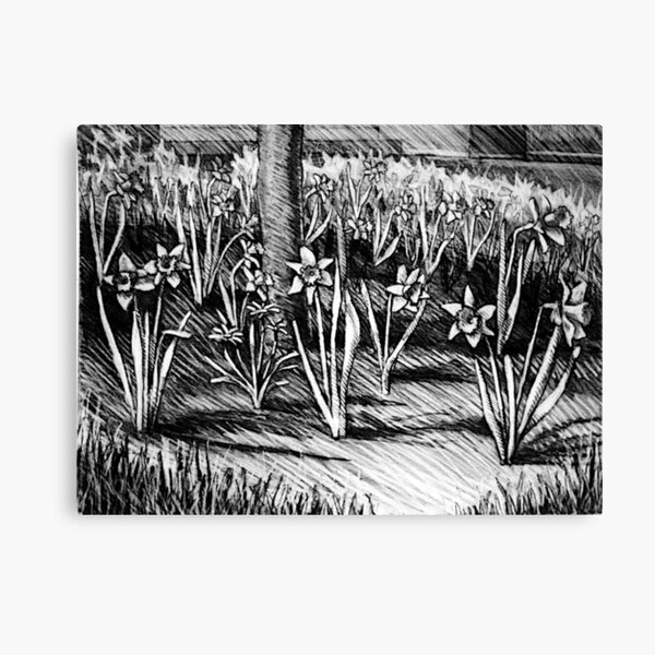 The Dafs of spring at Elmira College. Canvas Print
