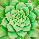 Green Flower von MMPhotographyUK