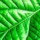 Green Leaf von MMPhotographyUK