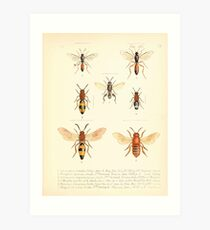 Aid to the identification of insects Charles Owen Waterhouse 1890 V1 V2 168 Various Art Print