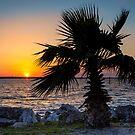 St. Joseph's Sound Sunset by Mikell Herrick