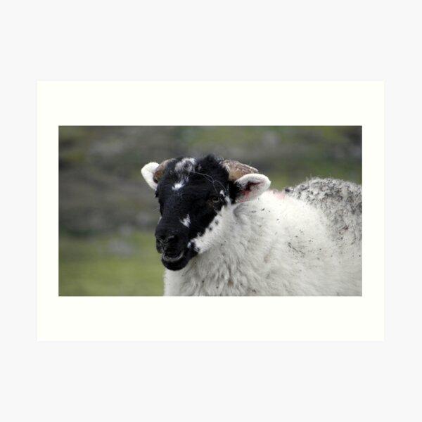 Laughing black faced lamb Art Print