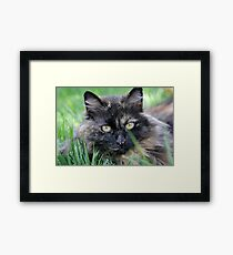 Dusty Tortie Framed Print