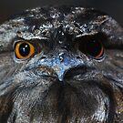Tawny Frog Mouth  - Dimo by john  Lenagan