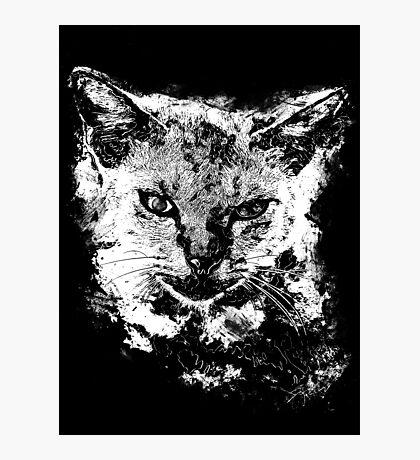 Cat art Photographic Print
