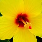 Tropical Flower - Yellow Hibiscus by ctheworld