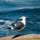 Seagull at Sunset Cliff's, San Diego by philw