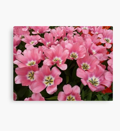 Lots of pink Canvas Print