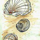 Beach Shell Study by Jay Brushett