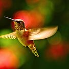 Rufous after morning rain.....~ by RoseMarie747