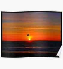 Bird Photobomb Poster