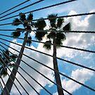 Peaceful Sky  by Bill Colman