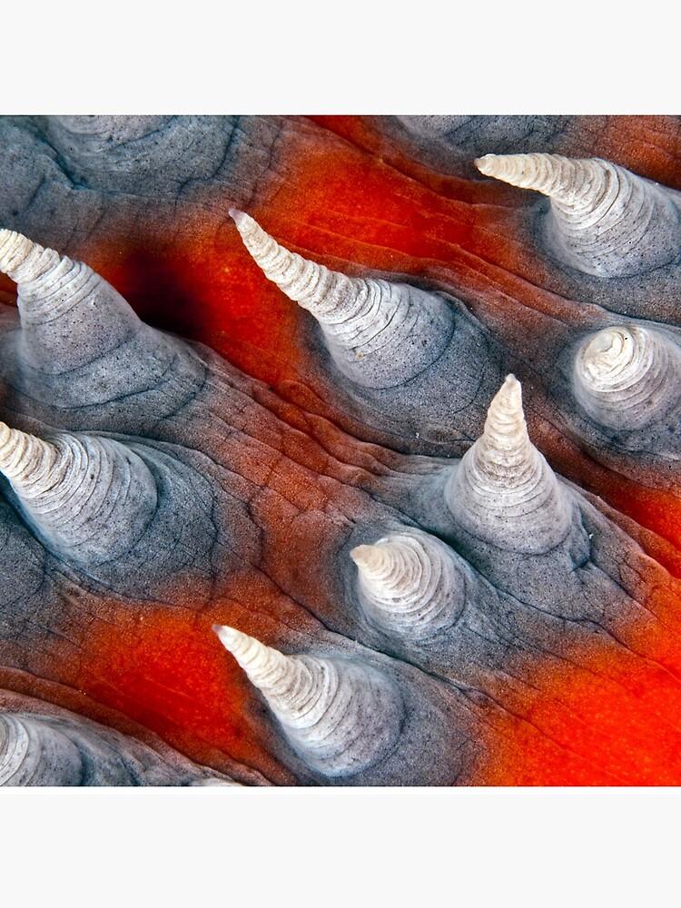 Teat? Fish? by DavidWachenfeld