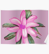 Painted Pink Bromeliad Poster