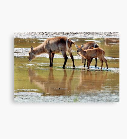 NO PLACE BETTER, THAN IN DIE MIDDLE OF THE RIVER ! Canvas Print