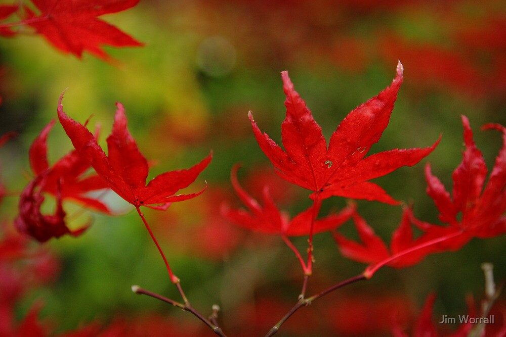 Autumn in the Gardens by Jim Worrall