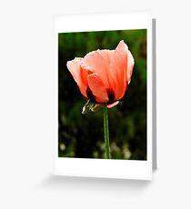 'Orlando Bloom'  Greeting Card