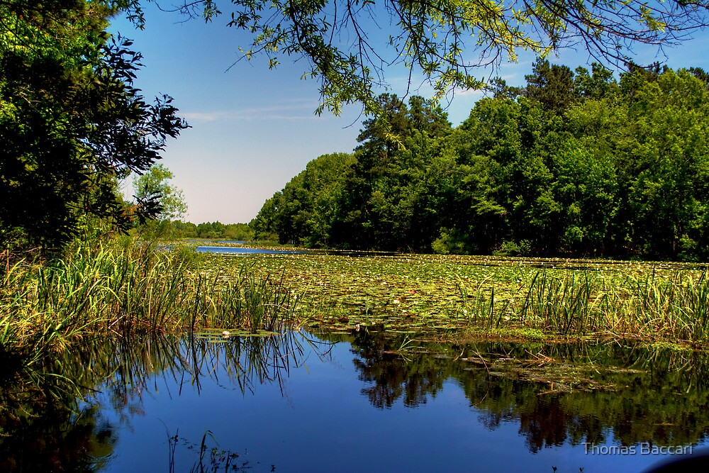Lake Marion by TJ Baccari Photography