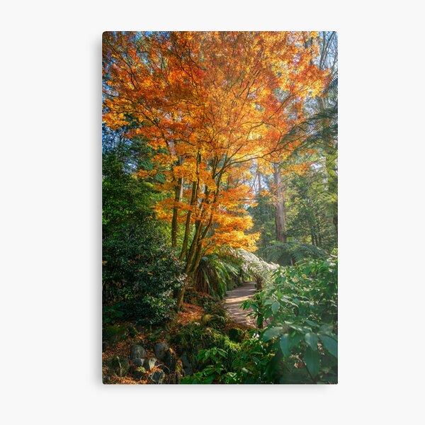 Fiery Orang Autumn Colors Metal Print
