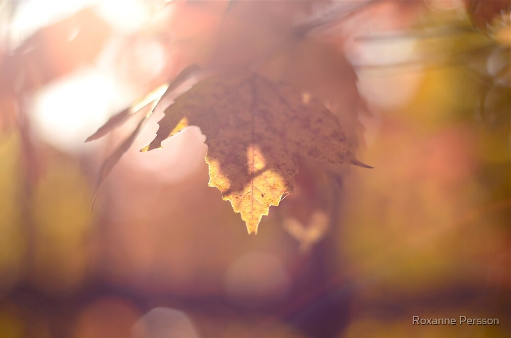 Don't Let Go by Roxanne Persson