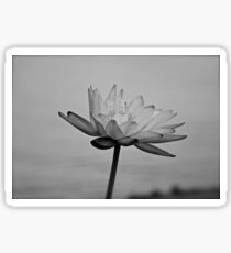 Peaceful Lotus Flower (B & W) Sticker