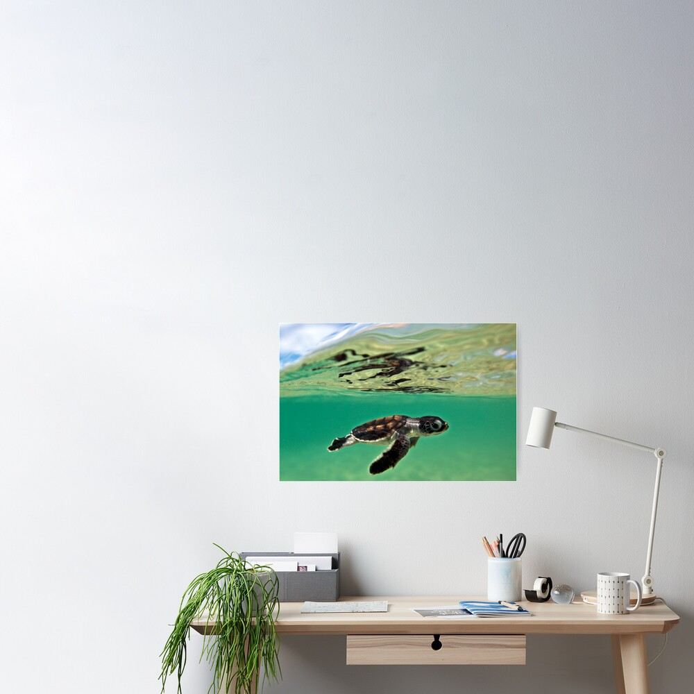 Long-distance swimmer Poster