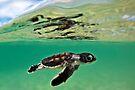 Long-distance swimmer by David Wachenfeld