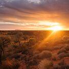 Sonnenaufgang am Ayers Rock | Uluru von Julie Thomas