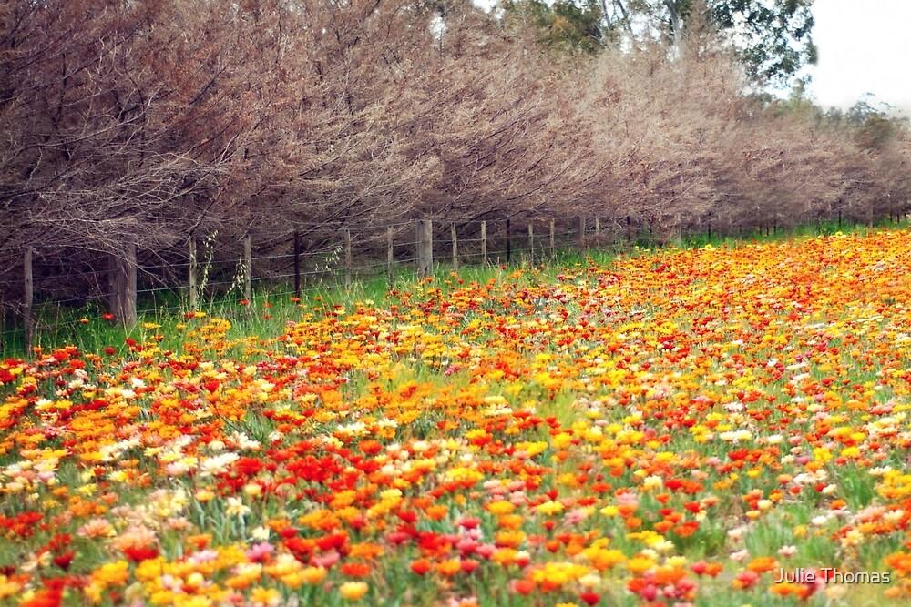 Changing Seasons by Julie Thomas
