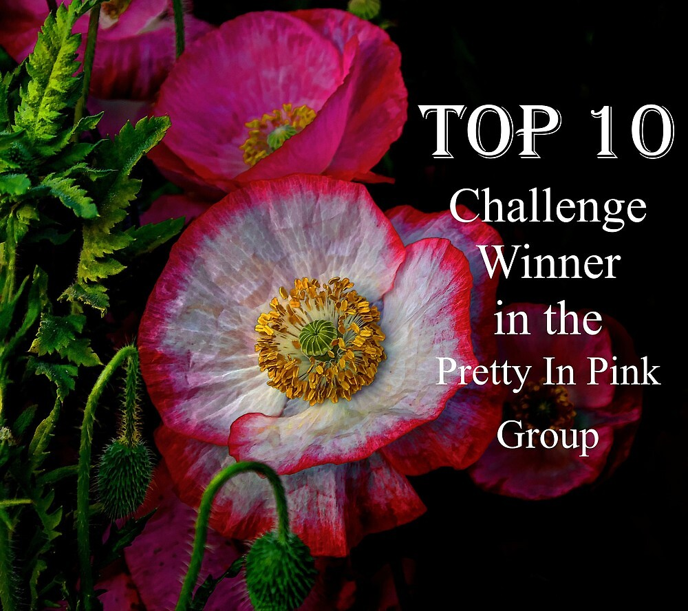 Top Ten Banner  by Charles & Patricia   Harkins ~ Picture Oregon