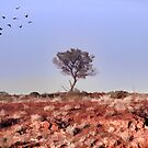 Lone Tree, Outback Australia. by Normf