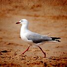 Gull by Julie Thomas