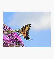 Butterfly017 Photographic Print