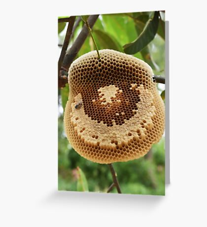 Bees on honycomb Greeting Card