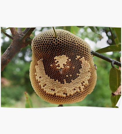 Bees on honeycomb Poster