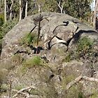 A large rock in a large nature reserve by kalaryder