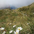 Flowers on the Mountain Top by Nicole Barnes