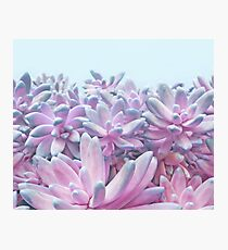 Sweet Succulents Photographic Print