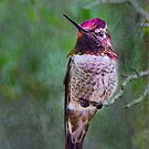 Colorful Hummer by Barbara Manis