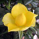 A sweet little rosebud by bubblehex08