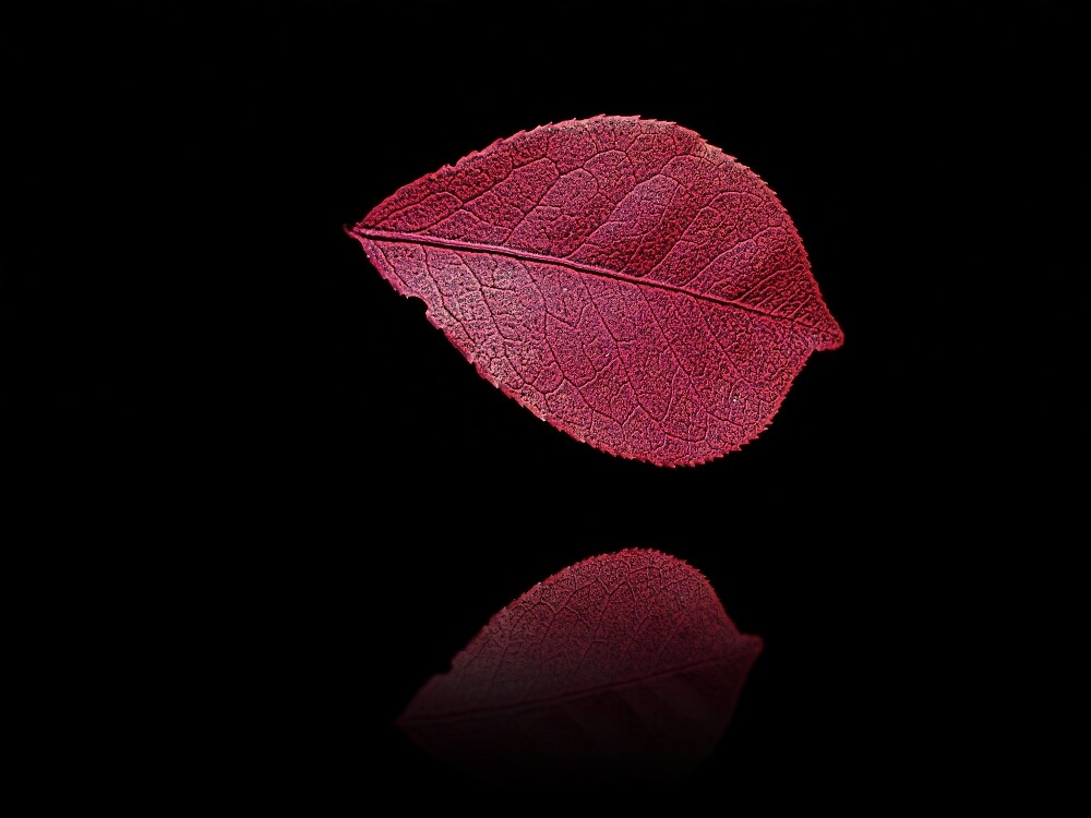 Red Beauty  by David Dehner